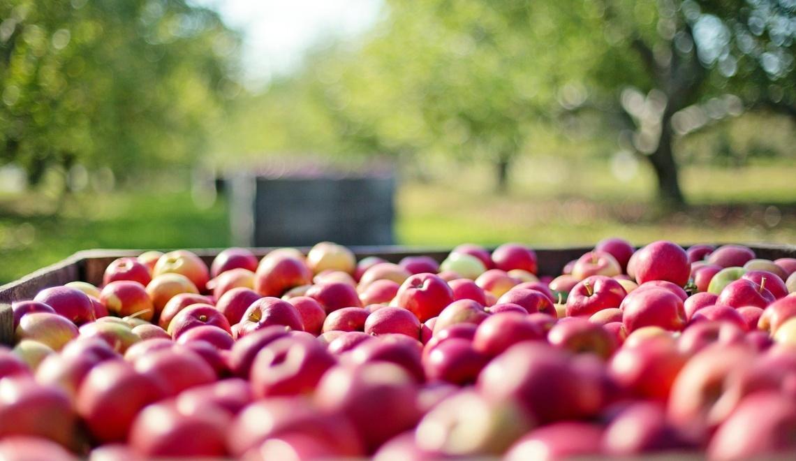 Apfelkulinarium